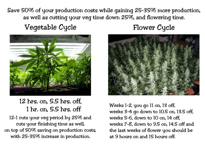Vegetative and Flowering Cycle