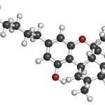 THC (delta-9-tetrahydrocannabinol, dronabinol) cannabis drug molecule. Atoms are represented as spheres with conventional color coding: hydrogen (white), carbon (grey), oxygen (red).