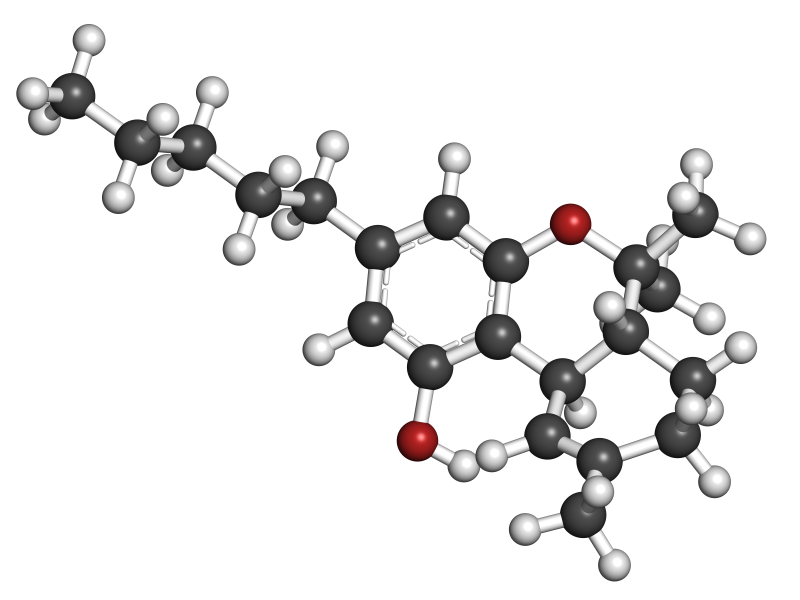 THC (delta-9-tetrahydrocannabinol, dronabinol) cannabis drug molecule. Atoms are represented as spheres with conventional color coding: hydrogen (white), carbon (grey), oxygen (red).